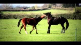 Horseplay Thumbnail