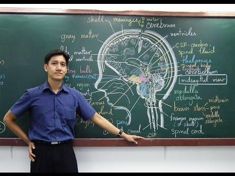 อ. เอกฤทธิ์ วีระพันธุ์ ชีววิทยา เรื่อง เซลล์ (แผนผังองค์ประกอบของเซลล์)