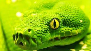 ТОП-10: самые ядовитые животные