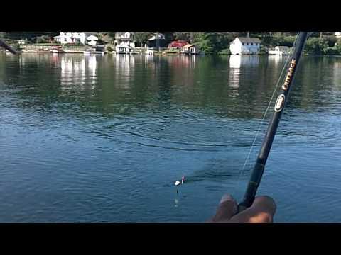 Harvey's Lake Brown trout