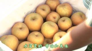 Promotion Video of Agriculture of Tsu city, Mie (Japan) 录像剪辑农产品津市, 三重縣(日本) (中國話)