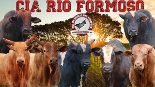 VISITANDO A CIA DE RODEIO RIO FORMOSO 2021 - PARTE 01 (APRESENTANDO A BOIADA)