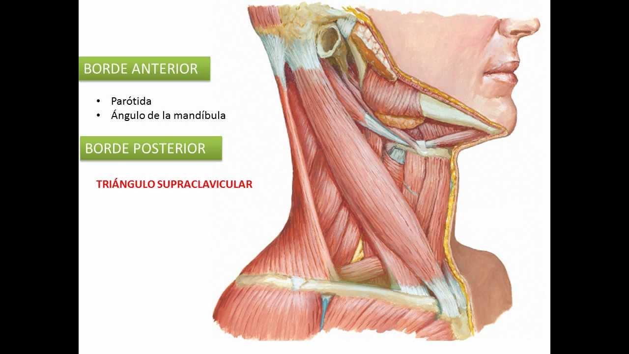 La curvatura de la columna vertebral. La escoliosis a los niños y los adultos