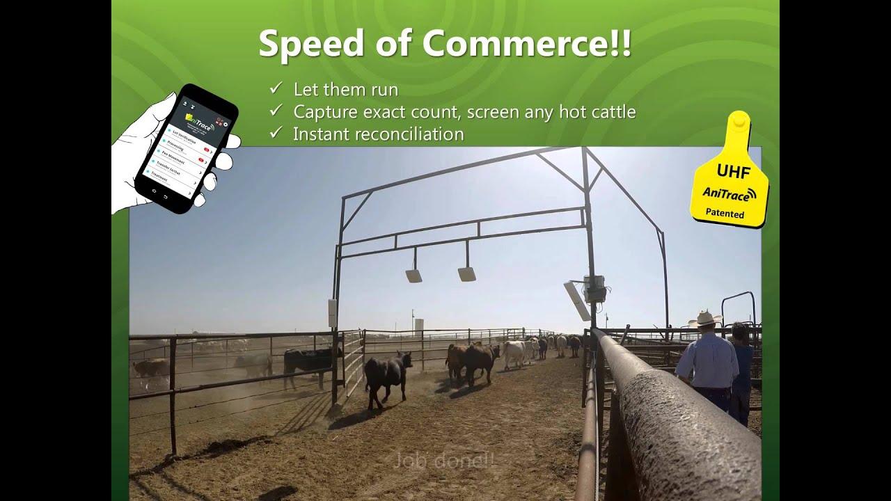 Uhf Rfid Solution For Livestock Management Anitrace Div