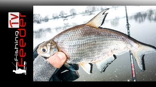 ✅Vlog #17 Рыбалка на фидер. Ловля белогл...