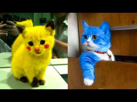 Baby Cats Cute And Funny Cat Videos Compilation 14 Aww Animals Youtube