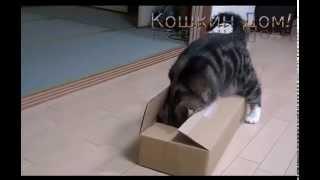 Умора!!! Кот Валяет Дурака!!