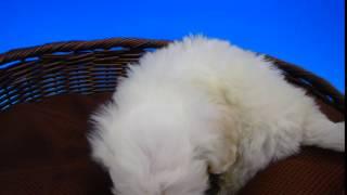 28年8月7日生まれ 男の子 カラー:ホワイト.