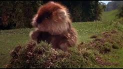 Caddyshack (1980) fullHD Movies online stream