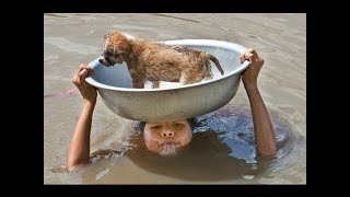 Top 2017 Most Inspiring Animals Rescues - Good People Saving Animals [ Emotional Videos]