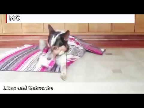 MUST WATCH!!! Cute and Smart dog