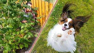 ПРЯТКИ с собакой как у Elli Di / Веселый ЮКИ ищет Алису!