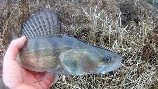 Спиннинг 2021 Ходовая рыбалка по Северскому Донцу Харьков Украина