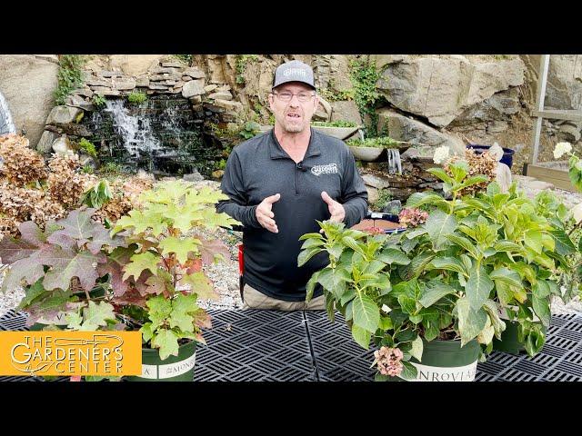 10/20/2021 Pruning Hydrangea with Sean