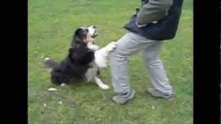 """Hundeschule Düren """"rurpfoten"""" - Individuelles Mensch-hund-coaching - Kleines Vorstellungsvideo"""