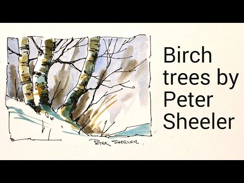 Draw And Paint Birch Trees In Watercolour By Peter Sheeler
