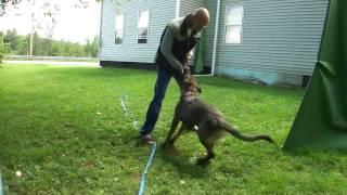 Bota Obedience training.MTS