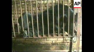 HONG KONG: BLACK BEARS & BEAR FARMING