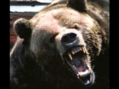 We da Bears ~ Chicago Bears