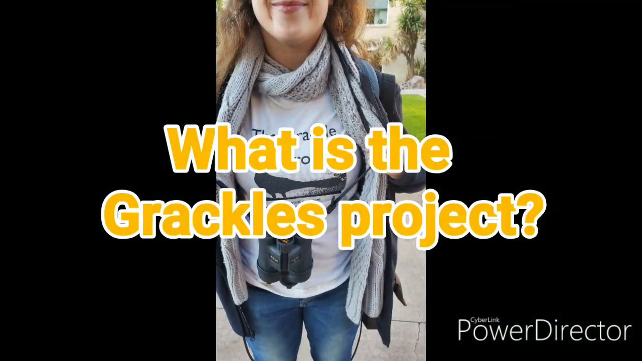 WHAT IS THE GRACKLES PROJECT? HOLLYWOOD HAPPENINGS