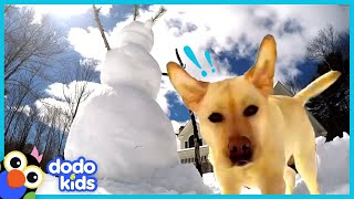 Stella The Dog Smashes Every Single Snowman | Animal Videos | Dodo Kids