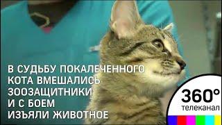 Кот, которого забрали у живодёрки из Кунцево, находится под присмотром ветеринаров