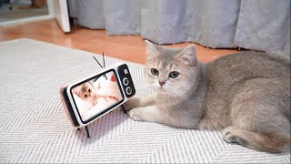 The reaction of cats to their baby videos.