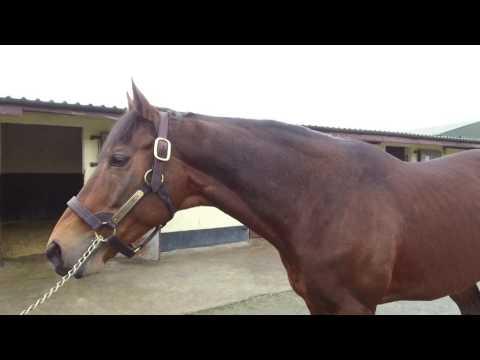 Coolagown Stud - Zambezi Sun - Irish Stallion Trail 2017