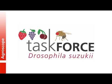 Task Force Drosophila suzukii