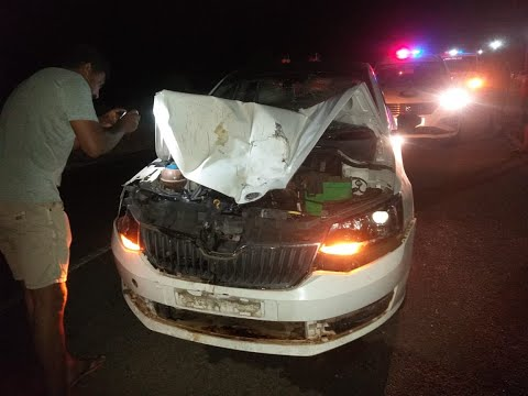 Skoda sedan hits buffalo at high-speed on NH-66