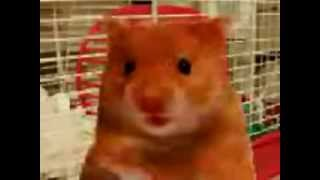 Harry the Hamster and friends compilation of naughty swearing talking animals