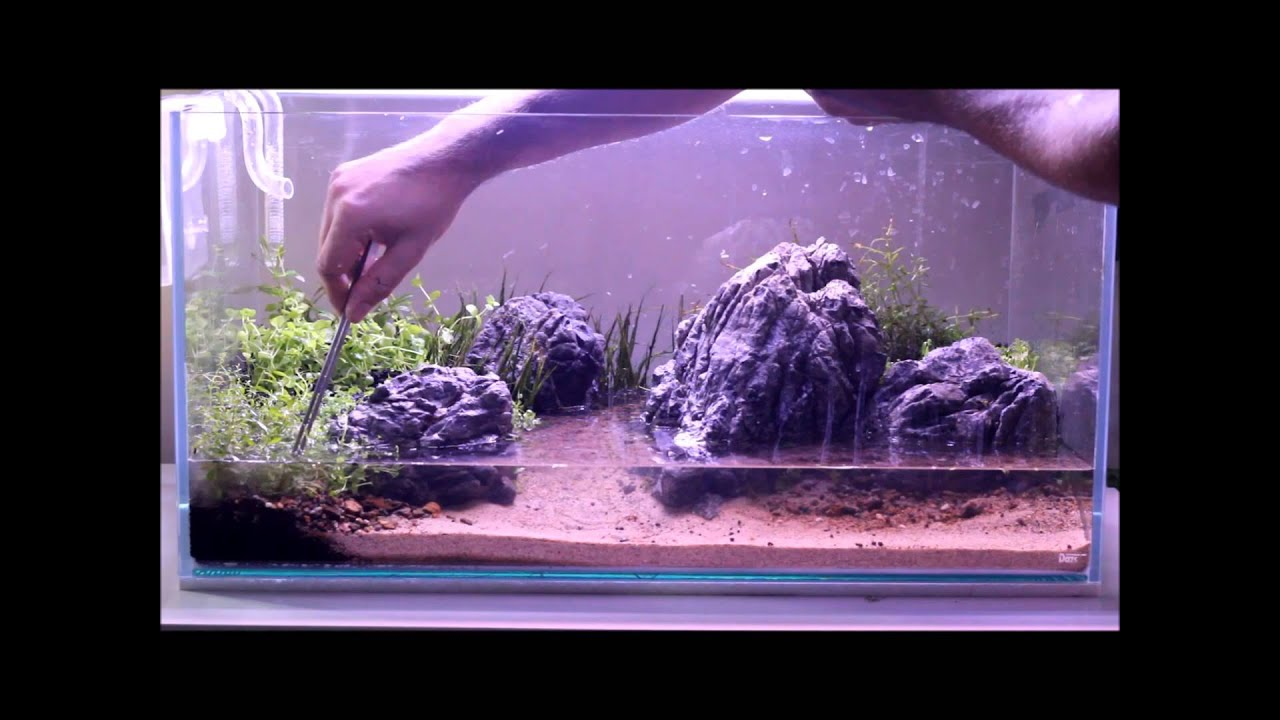 Nature aquarium setup part two plants youtube for Freshwater fish tank setup
