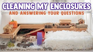 Cleaning BOTH Enclosures & Answering Your Questions!