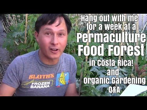 Hang Out With Me for a Week at a Permaculture Food Forest in Costa Rica  & Gardening Q&A