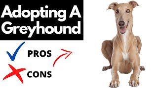 Pros And Cons Of Adopting A Greyhound | The Good AND The Bad!!