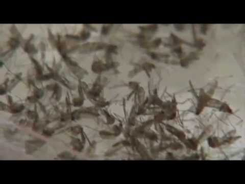 Mild winter, wet spring means tick population up in Oklahoma