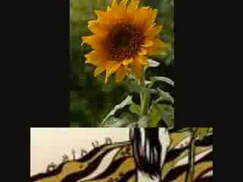 freddie hubbard little sunflower