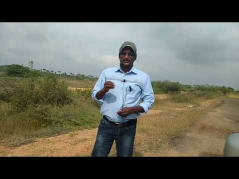 1.75 Lakhs /Acre - 10 ACRE AGRICULTURE LAND FOR SALE at NEAR MADURAI