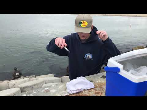 Ventura Rock Fishing