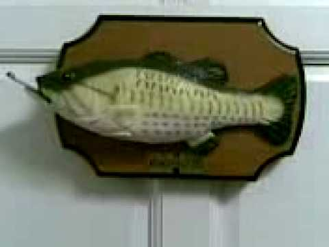 Smokin fish don 39 t worry be happy youtube for Dont worry be happy fish
