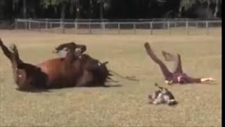 Лошадь играет с хозяйкой и собакой