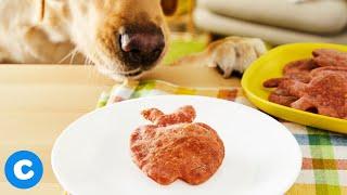 Homemade Back to School Dog Treats | Chewy Eats