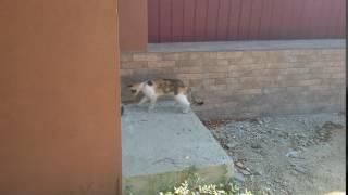 Мышка бьет Кошку