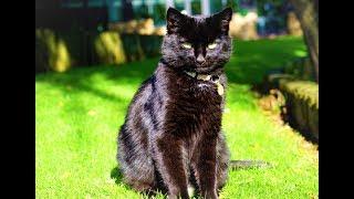 Чёрный кот на английском (Black Cat)