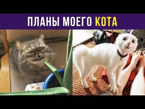 Приколы с котами. Планы моего кота | Мемозг #24