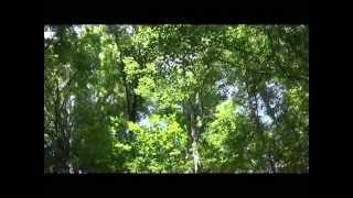 Bon Iver - Skinny Love - Alto Saxophone and Guitar by charlez360