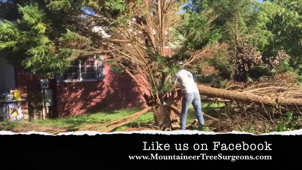 Mountaineer Tree Surgeons Sept  2016