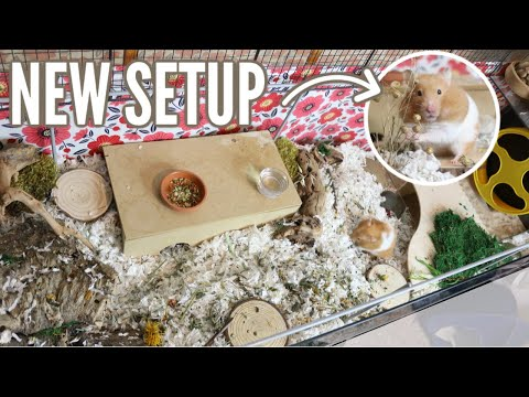 new-hamster-cage-setup!-(time-lapse)