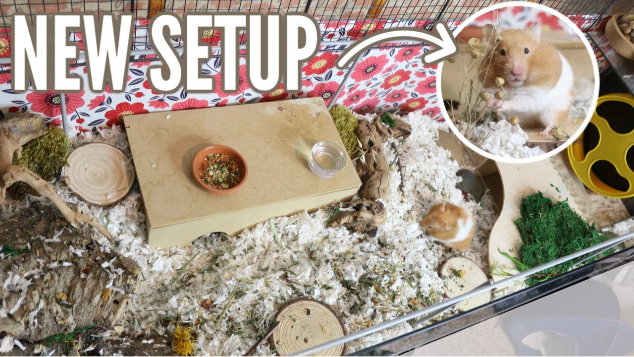 New Hamster Cage Setup! (Time-lapse) - Ijiradb