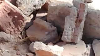 viborita pasea entre los escombros